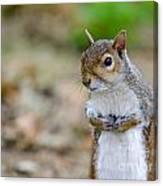 Standing Squirrel Canvas Print