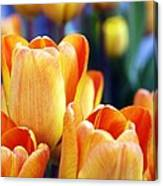Standing Tall Tulips Canvas Print