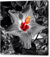 Star Bright Hibiscus Selective Coloring Digital Art Canvas Print