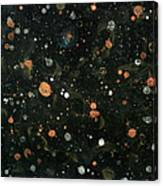 Star Nursery 8051 Canvas Print