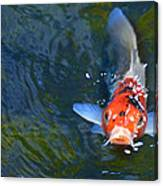 Stare Down With A Koi Canvas Print