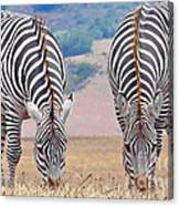 Stares And Stripes Canvas Print