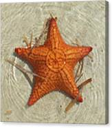 Starfish 1 Of Bottom Harbour Sound Canvas Print