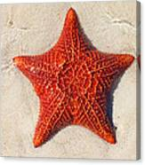 Starfish 4 Of Bottom Harbour Sound Canvas Print