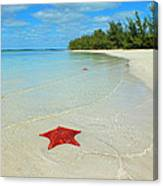 Starfish 5 Of Bottom Harbour Sound Canvas Print