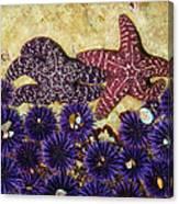 Starfish Dance Canvas Print