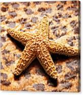 Starfish Enterprise Canvas Print