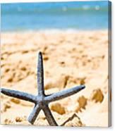 Starfish On Algarve Beach Portugal Canvas Print
