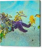 Starfish Paradise Canvas Print