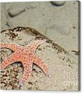Starfish Underwater Canvas Print