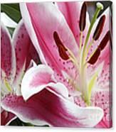 Stargazer Lily Flowers Closeup Canvas Print