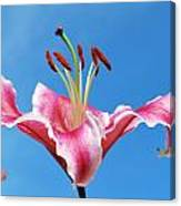 Stargazer Lily Series 1 Of 4 Canvas Print