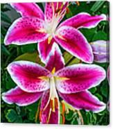 Stargazer Oriental Lilies Canvas Print