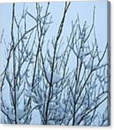 Stark Beauty - Snow On Branches Canvas Print