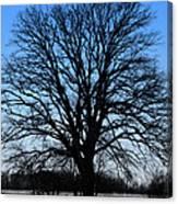 Stark Tree Canvas Print