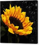 Starlight Sunflower Canvas Print