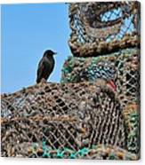 Starling On Lobster Pots Canvas Print
