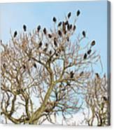 Starlings For Leaves - Sturnus Vulgaris Canvas Print