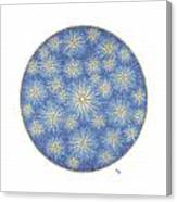 Starlit Sky Canvas Print