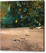 Starry Beach Night Canvas Print