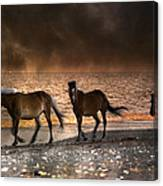 Starry Night Beach Horses Canvas Print
