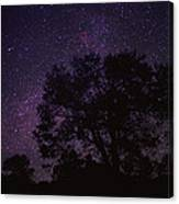 Starry Sky With Silhouetted Oak Tree Canvas Print