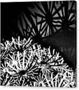 Stars Shadow Canvas Print