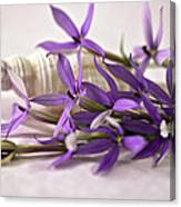 Starshine Laurentia Flowers And White Shell Canvas Print