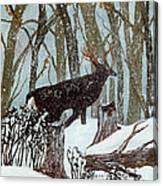 Startled Buck - White Tail Deer Canvas Print