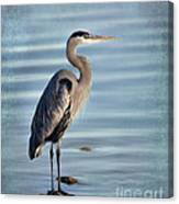 Stately-great Blue Heron Canvas Print