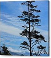 Stately Pine Canvas Print