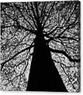Static Tree Canvas Print