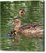 Staying Close To Mom Canvas Print