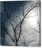 Steal Trees Canvas Print