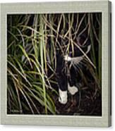 Stealth Cat Canvas Print