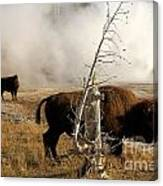 Steaming Bison Canvas Print