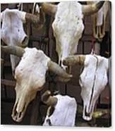 Steer Skulls  - New Mexico Canvas Print