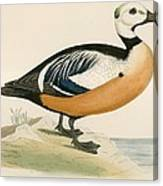 Stellers Western Duck Canvas Print