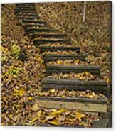 Step Trail In Woods 11 Canvas Print