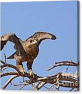Steppe Eagle Aquila Nipalensis 1 Canvas Print