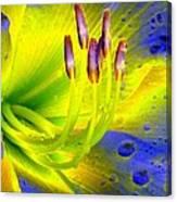 Stigma - Photopower 1157 Canvas Print