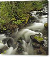 Still Creek Mt Hoodoregon Canvas Print