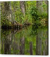 Stillness Swamp Canvas Print