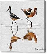 Stilt And Avocet Share The Pond Canvas Print