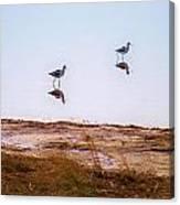 Stilt Birds Canvas Print