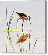 Stilt Chick Looking For Food Canvas Print