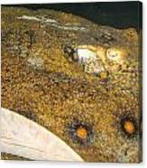 Sting Ray Canvas Print