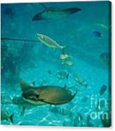 Stingray And Fish Canvas Print