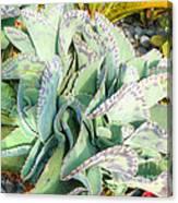 Stippled Cactus Canvas Print