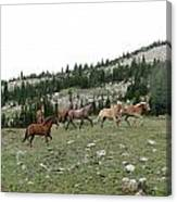 Stock Wrangling In Canvas Print